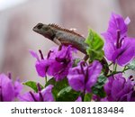 lizard standing on top of... | Shutterstock . vector #1081183484