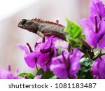 lizard standing on top of... | Shutterstock . vector #1081183487