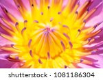 close up of blooming purple... | Shutterstock . vector #1081186304
