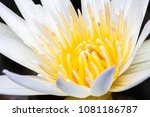 close up of blooming white... | Shutterstock . vector #1081186787