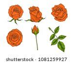 rose vector set by hand drawing.... | Shutterstock .eps vector #1081259927