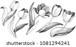 wildflower tulip flower in a... | Shutterstock .eps vector #1081294241