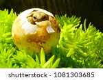 cute baby tortoise hatching on... | Shutterstock . vector #1081303685