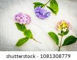 beautiful  pastel hydrangea...   Shutterstock . vector #1081308779