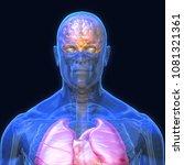 3d Rendering  Conceptual Human...