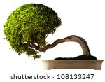Bonsai Tree Side View With A...