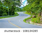 Asphalt Road Sharp Curve Along...