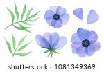 blue flowers  petals and leaves.... | Shutterstock . vector #1081349369
