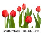 Set Of Red Tulips. Flowers...