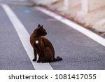 cat sitting on outside.   Shutterstock . vector #1081417055