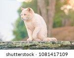 cat sitting on outside wooden...   Shutterstock . vector #1081417109