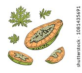 papaya sketch set. tropical...   Shutterstock .eps vector #1081435691