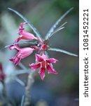 flower at garden botany bay ...   Shutterstock . vector #1081452221