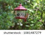 female northern cardinal... | Shutterstock . vector #1081487279