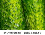 green cucumbers  vegetables | Shutterstock . vector #1081650659