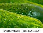 green cucumbers  vegetables | Shutterstock . vector #1081650665