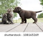 Stock photo cat and dog friendship 108165269