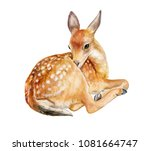 Fawn  Deer Sitting Isolated On...