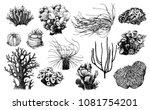 Hand Drawn Collection Of Corals ...