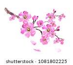 sakura tree  watercolor  cherry ... | Shutterstock . vector #1081802225