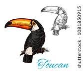 toucan tropical bird sitting on ... | Shutterstock .eps vector #1081850915