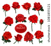 rose flower set of blooming... | Shutterstock .eps vector #1081855121