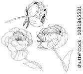 wildflower peonies flower in a... | Shutterstock .eps vector #1081865531