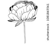 wildflower peonies flower in a... | Shutterstock .eps vector #1081865561