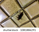 Small photo of A cockroach is climbing on the kitchen floor in the early morning it's can transport microbes and allergen on the body surface, the baking soda, garden herbs have been suggested to control it.