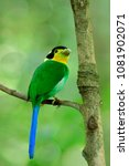 beautiful green bird with blue... | Shutterstock . vector #1081902071