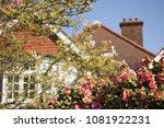 Beautiful Flowers Of Camellia...