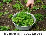 fresh herbs   parsley  celery ...