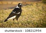 Classic Australian Bird The...