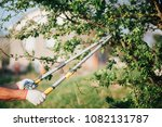 Pruning Of Trees With Secateur...