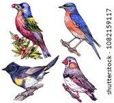 watercolor set of  birds on... | Shutterstock . vector #1082159117