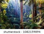 light rays shingint through... | Shutterstock . vector #1082159894