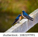 two dainty delightful  little... | Shutterstock . vector #1082197991