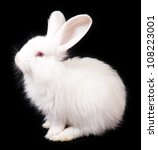 Stock photo white rabbit on a black background 108223001