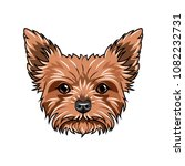 yorkshire terrier dog portrait. ... | Shutterstock .eps vector #1082232731