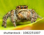 macro photography insect | Shutterstock . vector #1082251007