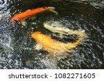 beautiful   koi  fish  swimming. | Shutterstock . vector #1082271605