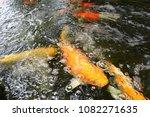goldfish  are  swimming. | Shutterstock . vector #1082271635
