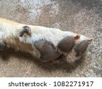 dirty feet of dog with cement... | Shutterstock . vector #1082271917