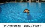 dog  golden retriever ... | Shutterstock . vector #1082354054