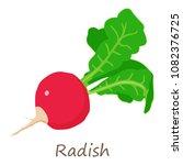 fresh radish icon. isometric of ...   Shutterstock .eps vector #1082376725