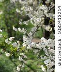 spring flowers. bloom apple and ... | Shutterstock . vector #1082413214