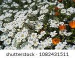 wild flowers meadow | Shutterstock . vector #1082431511