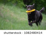 funny brown labrador playing... | Shutterstock . vector #1082480414