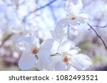 blooming flowers of white... | Shutterstock . vector #1082493521