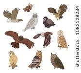 owls variations hand drawn... | Shutterstock . vector #1082528234
